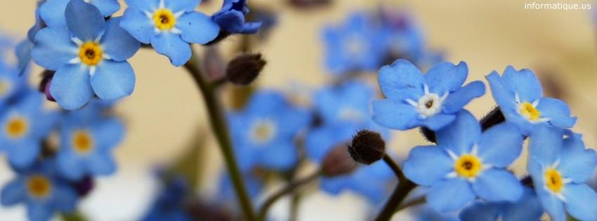 photo de couverture fleur  pour reseau social facebook ou google plus