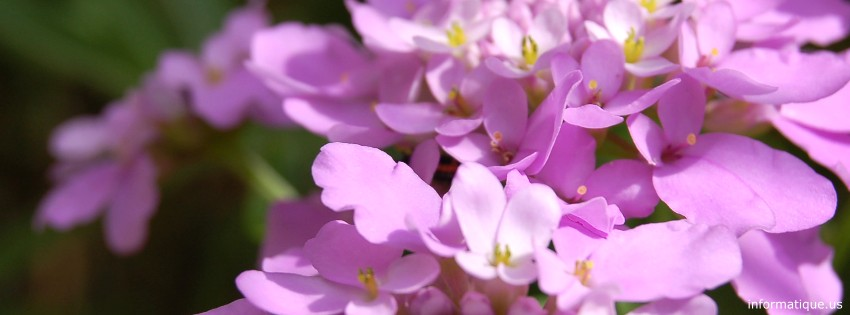 Image Photo De Couverture Fleur Couverture Facebook Fleurs